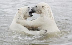 白色,北极熊,蟒蛇梦见白熊大动物和我睡觉图片
