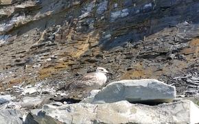 seagull, sandstone, cobblestone