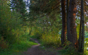 forest, trees, TRACK, nature