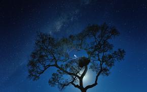 spazio, Stella, luna, notte, Via Lattea, albero, uccello
