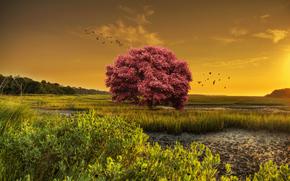 rise, swamp, tree, landscape