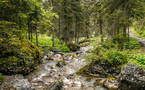 forêt, rivière, arbres, nature