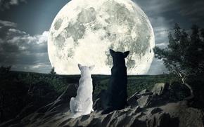 moon, dogs, looking, sky, night