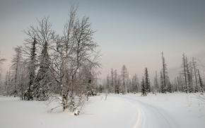 sunset, winter, trees, footpath, landscape