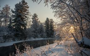 río, invierno, bosque, árboles, puesta del sol, naturaleza