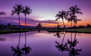 Fajardo, Puerto Rico, Fajardo, Puerto Rico, tropics, Palms, sunset, water, reflection