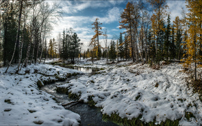 речка, ручей, лес, осень, деревья, природа