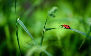 трава, жук, макро