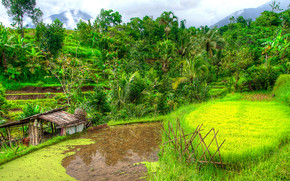 Bali, Indonesia, campi di riso