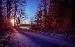 autunno, stradale, tramonto, foresta, alberi, paesaggio