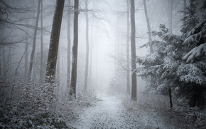 forest, trees, autumn, snow, fog, nature