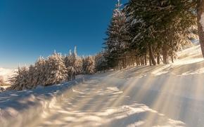 冬天, 道路, 树, 日光, 景观