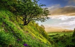 colina, altozano, árbol, Flores, paisaje