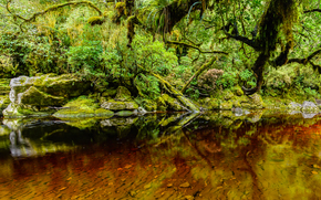 речка, лес, деревья, природа