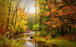 осень, речка, лес, деревья, природа