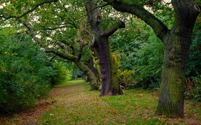 公园, 森林, 树, 性质