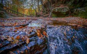 осень, речка, лес, природа