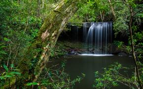 forêt, arbres, cascade, nature