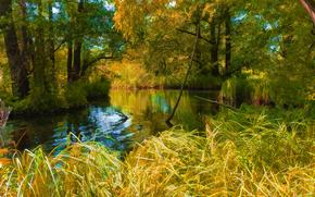 automne, rivière, herbe, arbres, nature