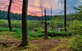 sunset, forest, swamp, trees, landscape