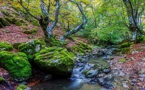 лес, деревья, осень, речка, камни, природа
