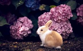 кролик, крольчонок, малыш, цветы, гортензия