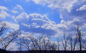 ciel, nuages, arbres, nature