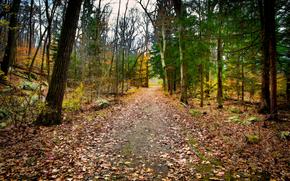 forêt, arbres, automne, route, nature
