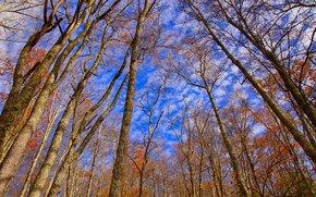automne, ciel, arbres, nature
