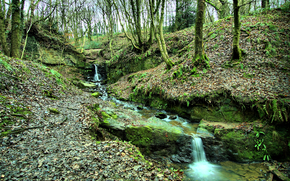 foresta, alberi, piccolo fiume, torrente, cascata, natura