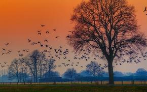 осень, закат, дорога, деревья, стая птиц, пейзаж