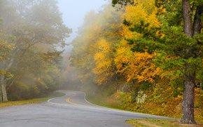 automne, route, arbres, brouillard, paysage