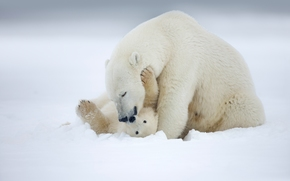 Alaska, Alaska, polar bear, polar bear, Bears, she-bear, teddy-bear, cub, Motherhood, love, snow, winter