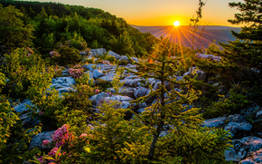 Dolly Sods Wilderness, Monongahela National Forest, Allegheny Mountains, West Virginia, Monongahela National Forest, Allegheny Mountains, Allegan, Virginia Dell'ovest, tramonto, altopiano