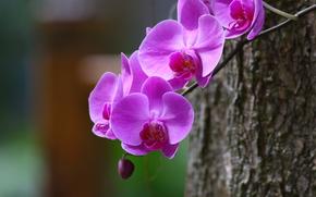 орхидея, ветка, макро