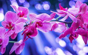 орхидея, экзотика, ветка, макро