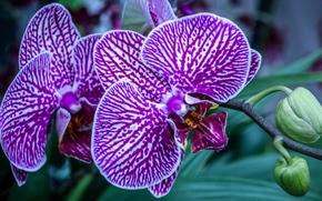 orquídea, exóticas, rama, Macro