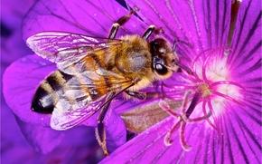 цветок, пчела, макро