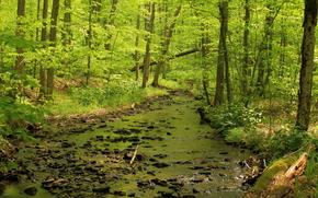 foresta, alberi, fiume, natura