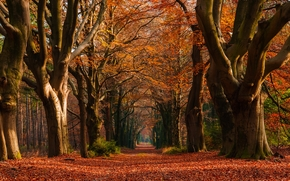 autumn, forest, park, trees, road, landscape