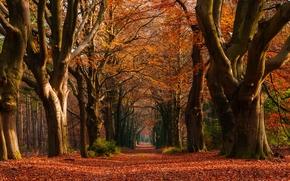 jesień, las, park, drzew, droga, krajobraz