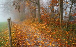 autunno, stradale, alberi, nebbia, paesaggio