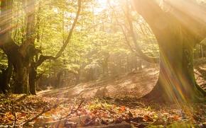 осень, лес, деревья, солнечные лучи, природа