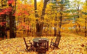 otoño, árboles, Sillas de escritorio, paisaje