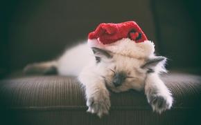 sonho, bon?, gatinho, Gatinho do sono