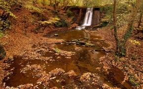 лес, осень, деревья, водопад, речка, природа