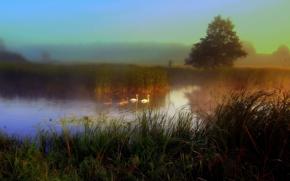 fiume, DAWN, nebbia, Oche, Cigni, paesaggio