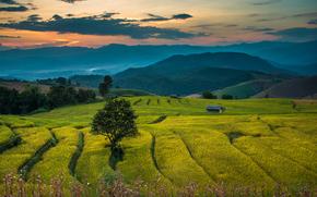 puesta del sol, campos de arroz, Montañas, Hills, árboles, paisaje