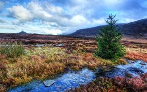 речка, холмы, поле, дерево, ель, пейзаж
