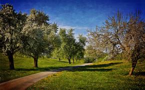 сад, дорога, деревья, пейзаж